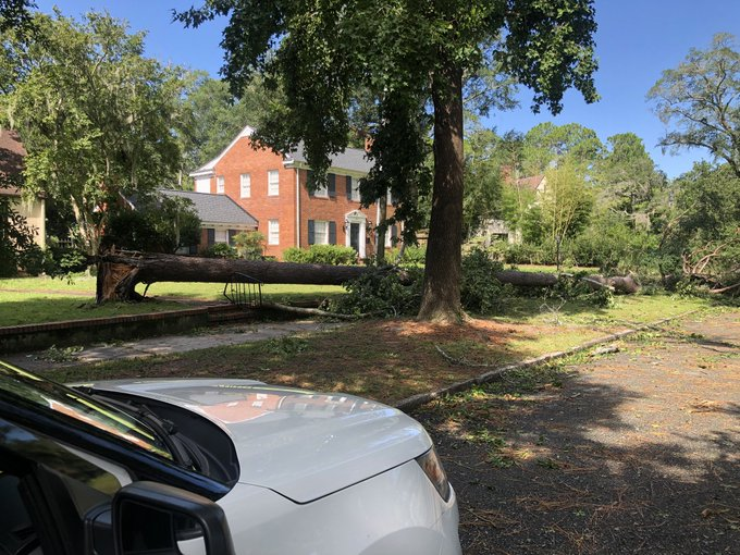 Trees down around Wilmington off Oleander Drive. (Tess Bargebuhr/WGHP)