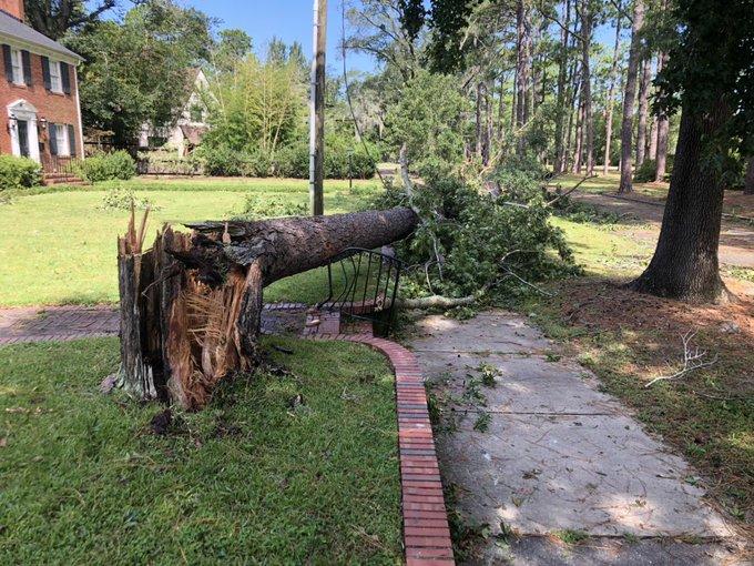 Trees down around Wilmington. (Chris Weaver/WGHP)