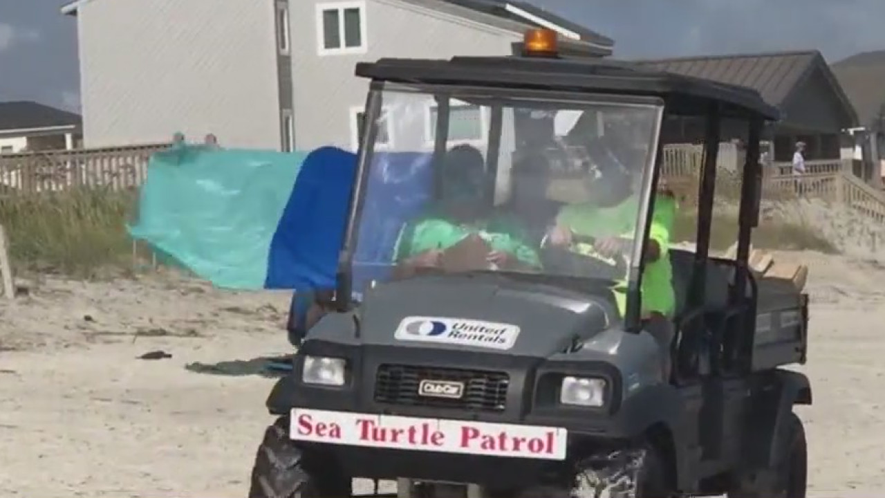 Sea turtle nests on Oak Island face danger as Isaias rolls in; volunteers work to keep them safe
