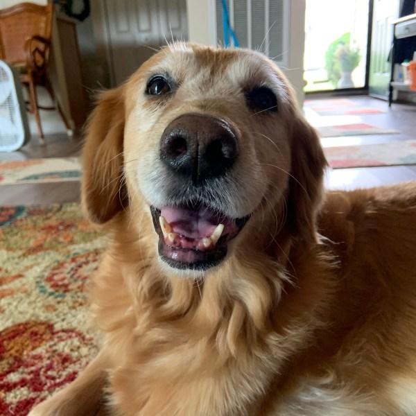 Meet Emily, FOX8's Pet of the Week!