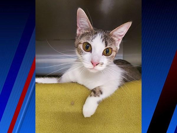 Meet Rosie, FOX8's Pet of the Week