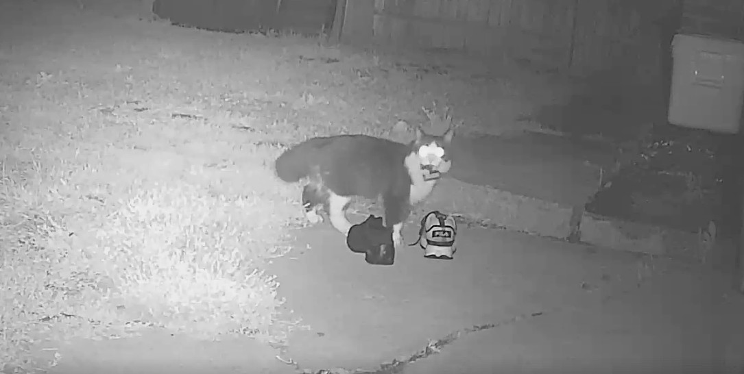 'Cat' burglar is after shoes in Pennsylvania neighborhood