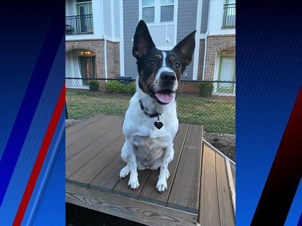 Meet Ripley, FOX8's Pet of the Week