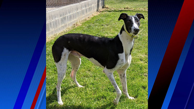 Meet Lee, FOX8's Pet of the Week