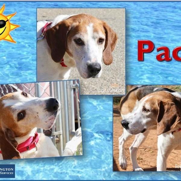Meet Pace, FOX8's Pet of the Week