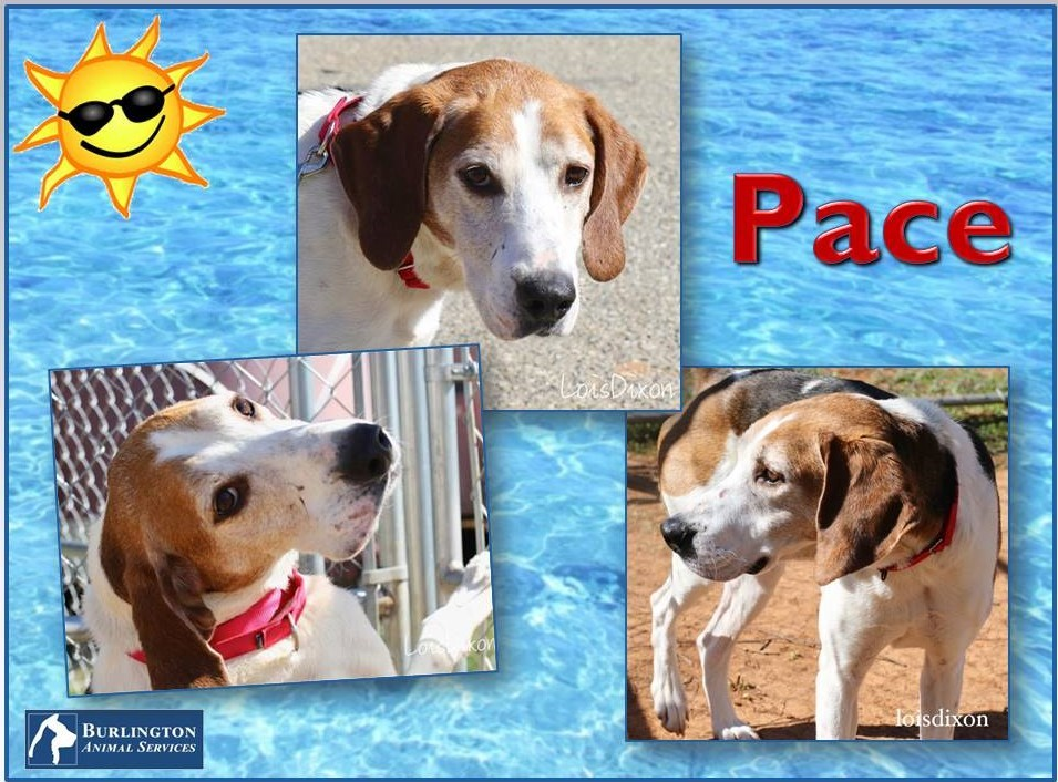 Meet Pace, FOX8's Pet of the Week