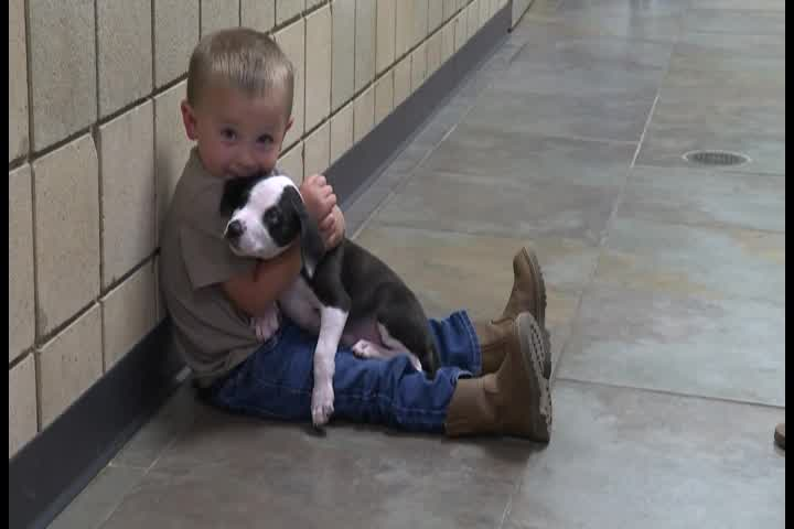 A 2-year-old boy finds a dog that has the same birth defect as him and they bond instantly