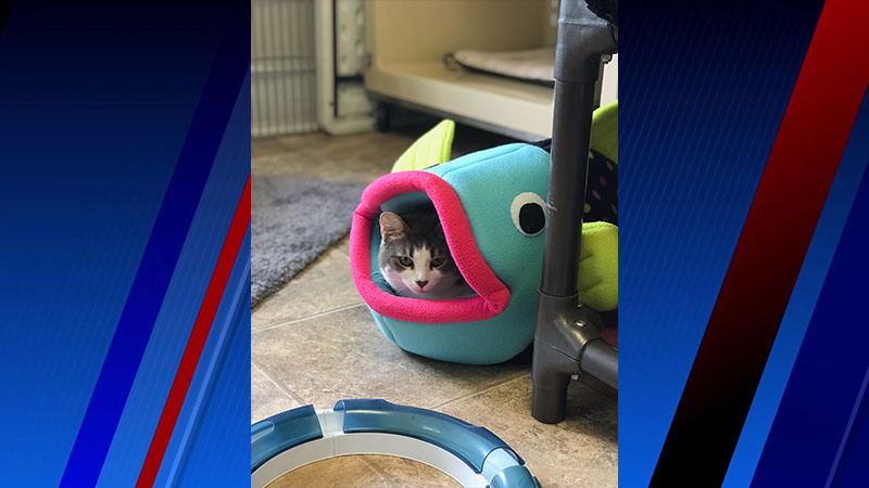 Meet Eliza, FOX8's Pet of the Week