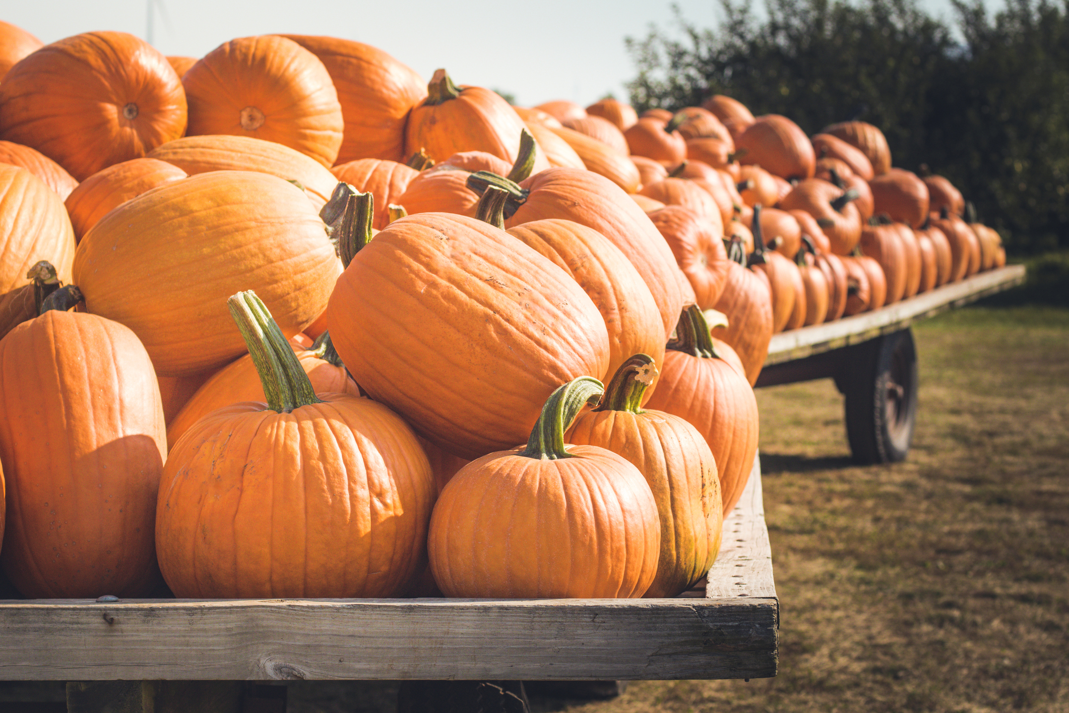 Pumpkins (Getty Images)