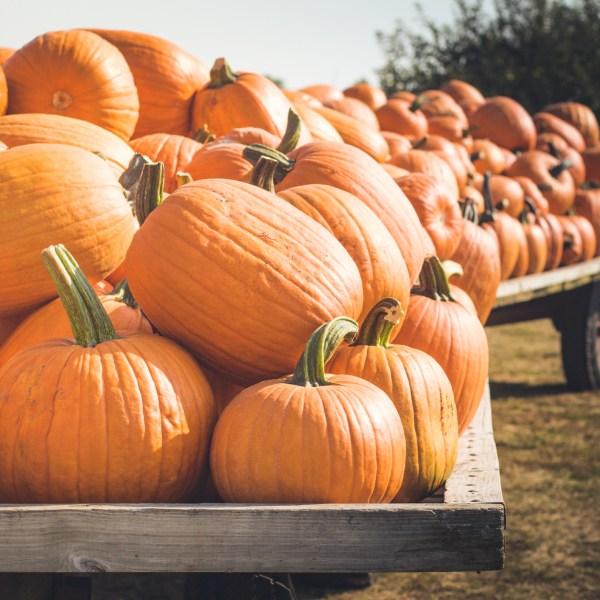 Pumpkins (Getty Images)