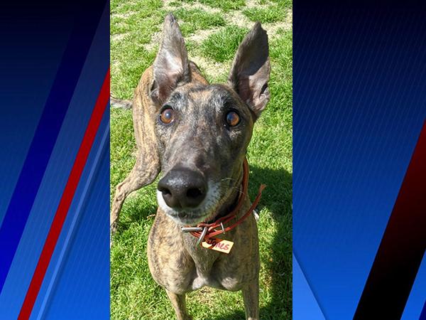 Meet Jones, FOX8's Pet of the Week