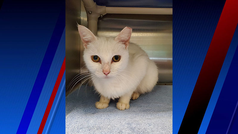 Meet Princess, FOX8's Pet of the Week
