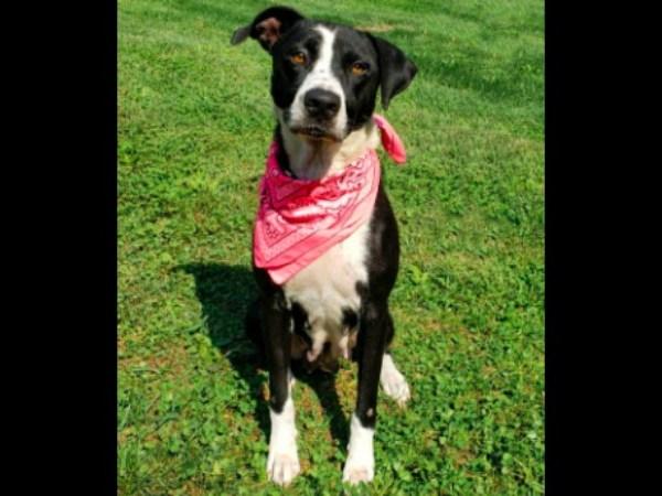 Meet Riley, FOX8's Pet of the Week