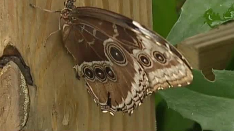 Kaleidoscope Butterfly Garden at NC Zoo lets visitors see butterflies from all over the world