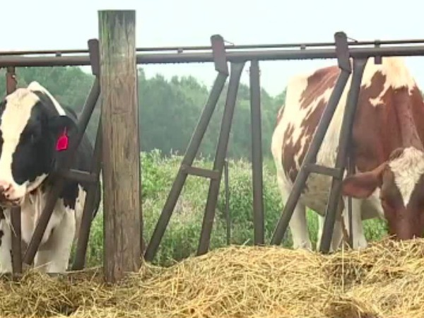 $2 million in aid to go to NC dairy farmers