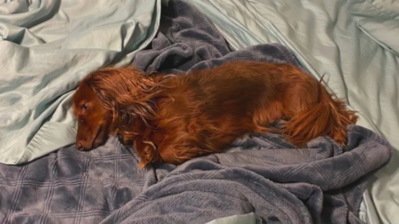 Davidson County family asking for community's help finding dog after rollover crash
