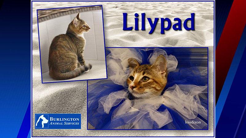 Meet Lilypad, FOX8's Pet of the Week