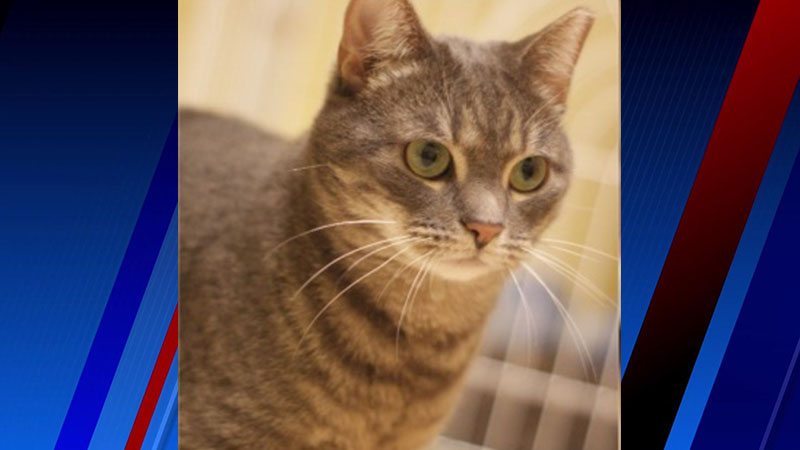 Olive is our Pet of the Week.