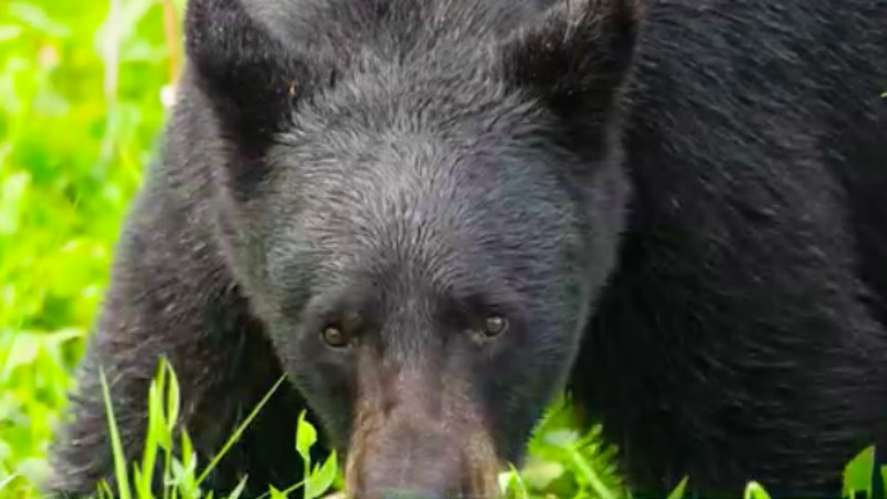 Local man captures North Carolina wilderness in his photos