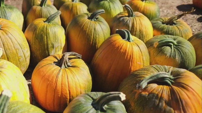 Pandemic not slowing down Winston-Salem pumpkin patch