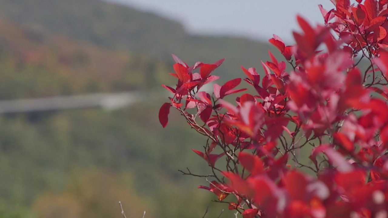 See the stunning colors changing along the Blue Ridge Parkway