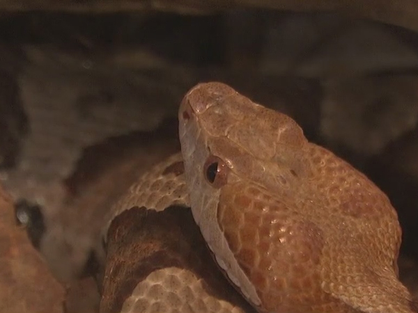 Experts say more snakes are out during this time of year in the Triad