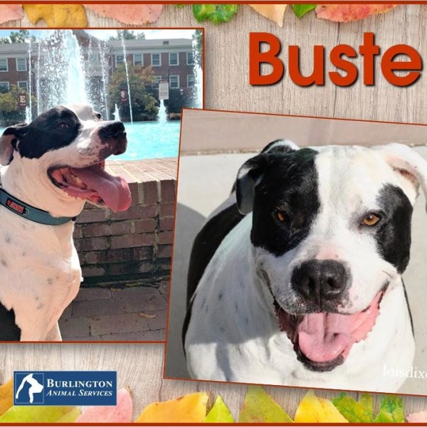 Meet Buster, FOX8's Pet of the Week