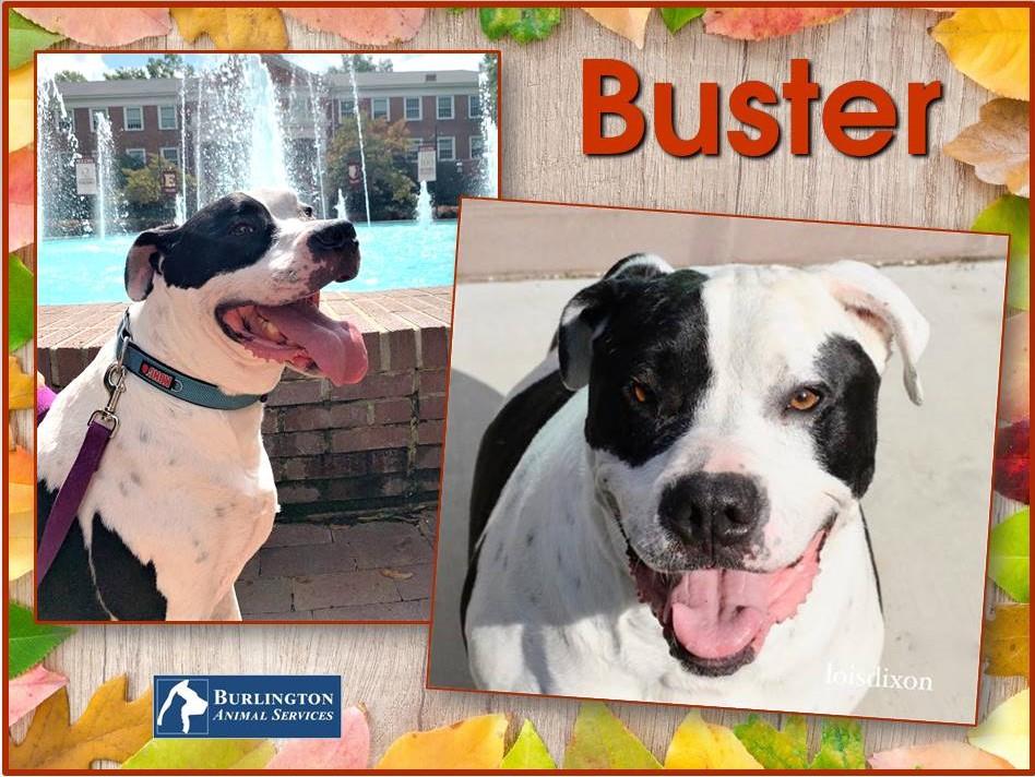 Meet Buster, FOX8's Pet of the Week