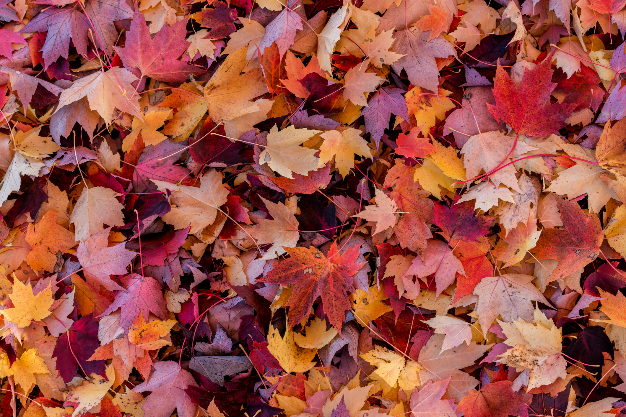 Autumn leaves cover the forest floor (Getty Images)