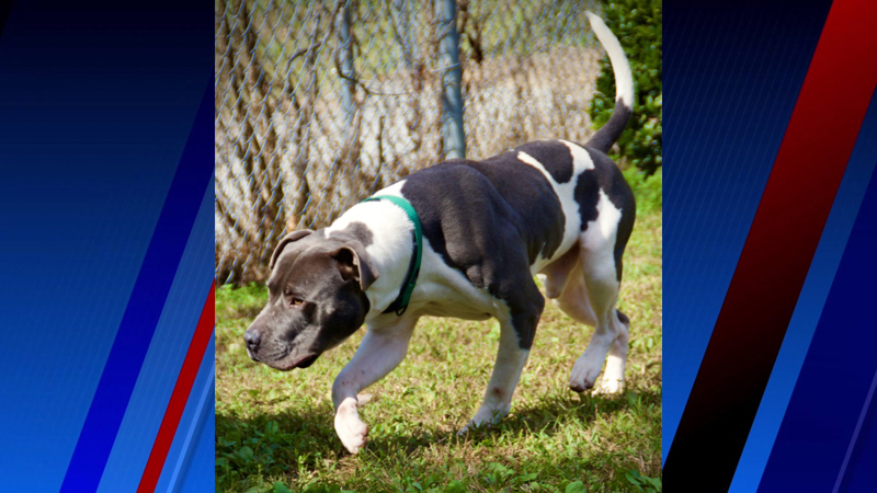 Champ is our Pet of the Week