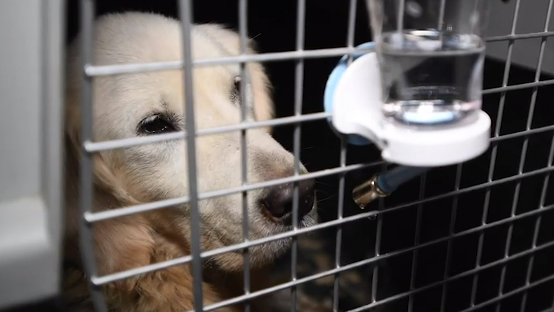 New US homes sought for 196 dogs rescued from South Korean meat farm (Photo via WDVM)