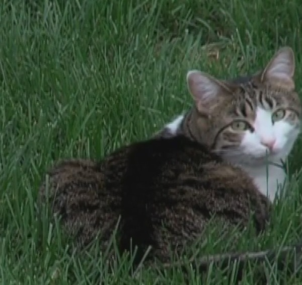 Is your pet itchy? A High Point veterinarian says there could be a simple way to help