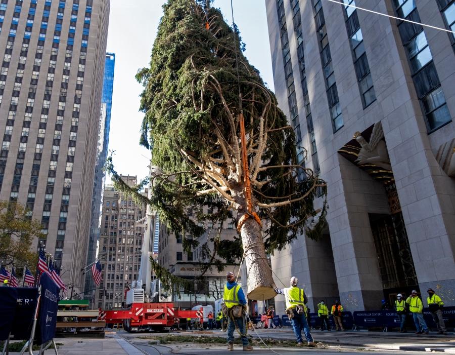 Rockefeller Christmas Tree 2020 Tallest Rockefeller Center Christmas tree goes up; lighting on Dec. 2