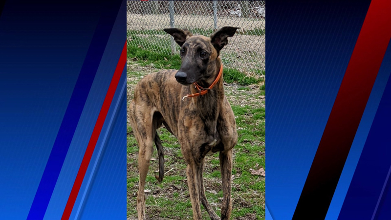 Meet Barry, FOX8's Pet of the Week