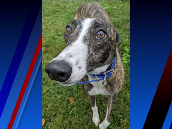 Beth is our Pet of the Week!
