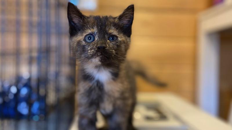 Meet Maze, FOX8's Pet of the Week