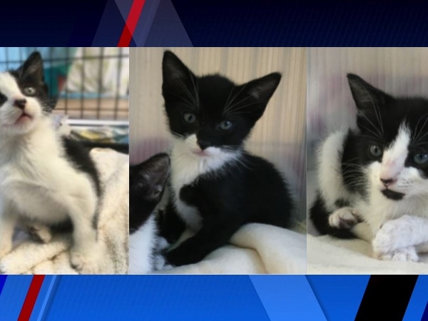 Meet Ruth, Atwood and Toby, FOX8's Pets of the Week