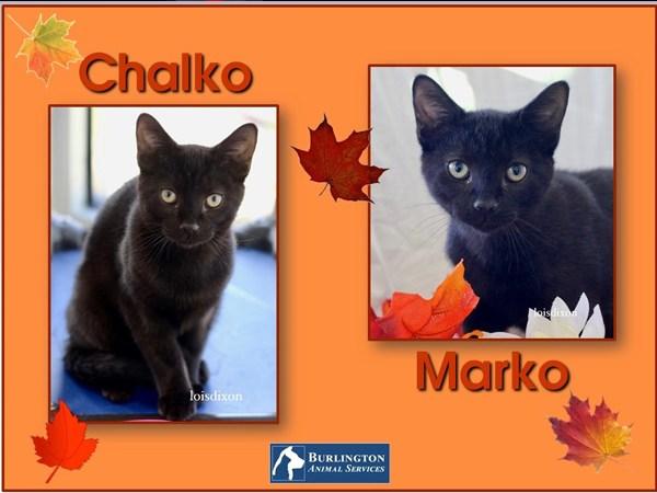 Meet Chalko and Marko, FOX8's Pets of the Week