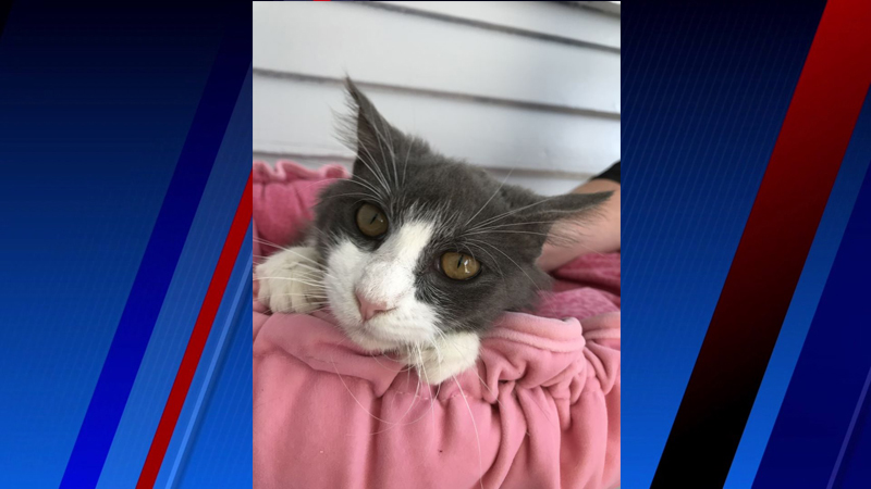 Meet Ella, FOX8's Pet of the Week