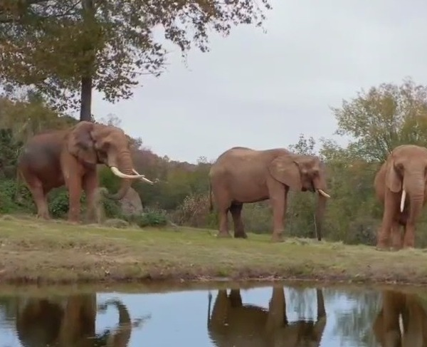 What's next as 'Nat Geo Wild' explores the North Carolina Zoo