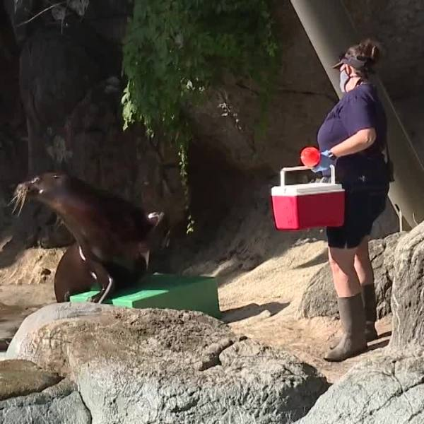 Researchers studied NC Zoo animals' reactions to no visitors during COVID shutdown