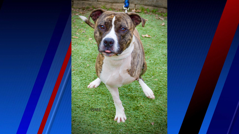 Meet Perkins, FOX8's Pet of the Week
