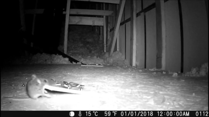 Mouse caught on local critter cam stealing not just cheese but entire mousetrap