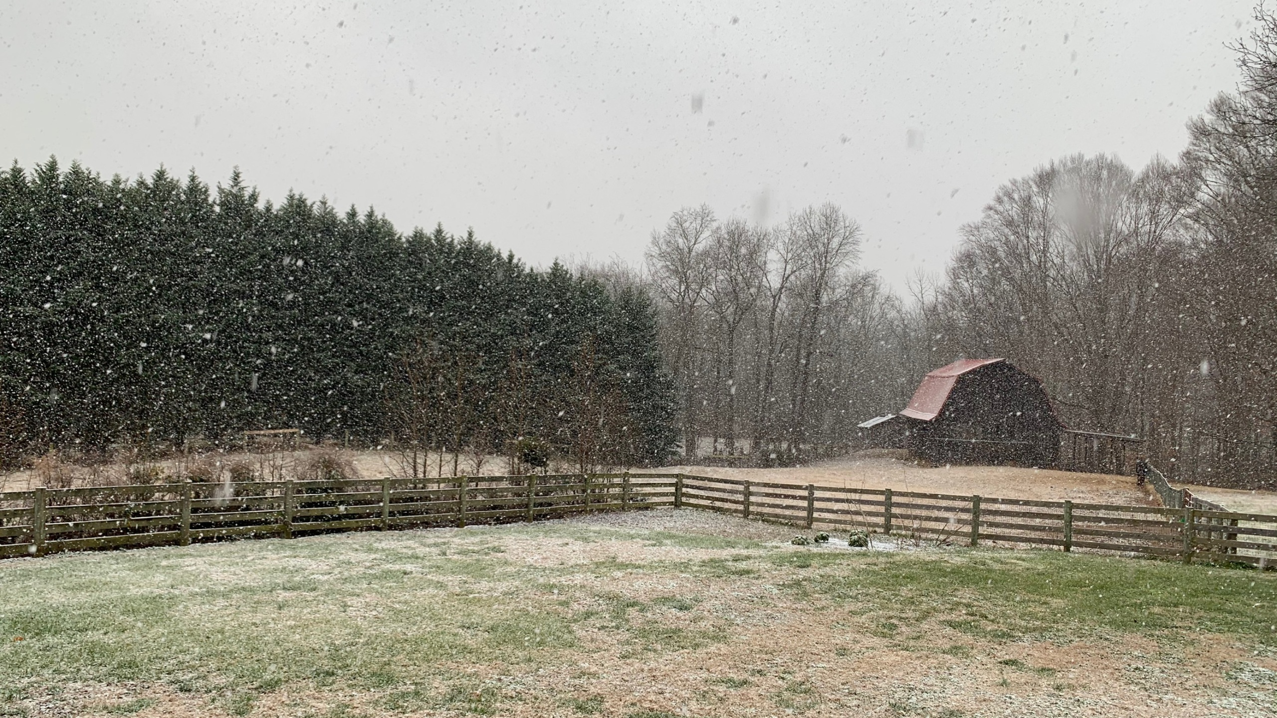 Snow in Summerfield (Stephanie Doyle/WGHP)