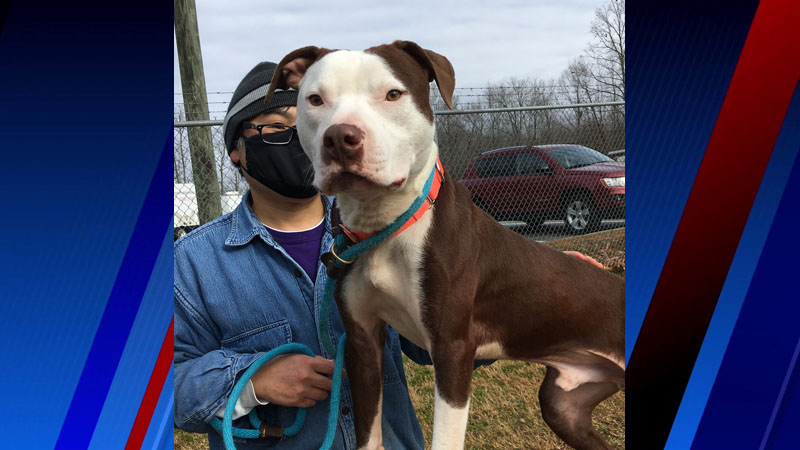 'Friendly' Romeo has love to share and energy to spare
