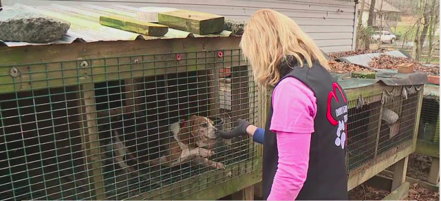 Davidson County Animal Alliance helps pets across the county
