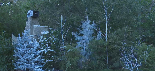 Snow machines installed, fun winter activities planned at NC Zoo