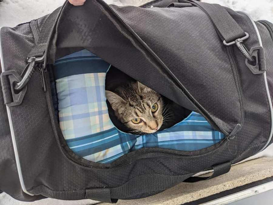 Bomb squad finds bag of kittens in Butler County, Ohio. (Butler County Sheriff's Office)