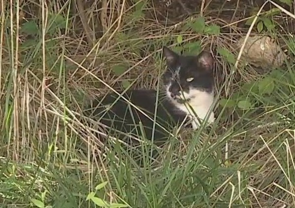 'Community cats' may be cute, but they're a growing problem in Guilford County; here's what one group is doing to keep those cats in check