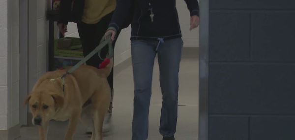 'We are the voice for the animals': Alamance County District Attorney launches new team dedicated to crimes against animals